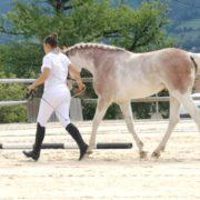 L'HILTON D'ORCHIDEA*RIVES MARGOT étalon SBS sabino splash white