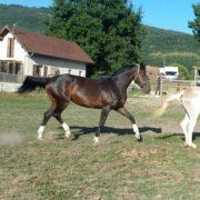 CYPHRE poulinière KWPN par ESCUDO I et SIFRA (QUICK STAR)