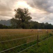 Ecuries des Rives de la Tour (élevage, pension, étalonnage, débourrage ...), RHÔNE-ALPES (Savoie)
